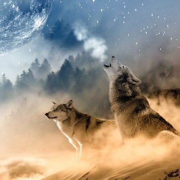 wolves-1400819_640